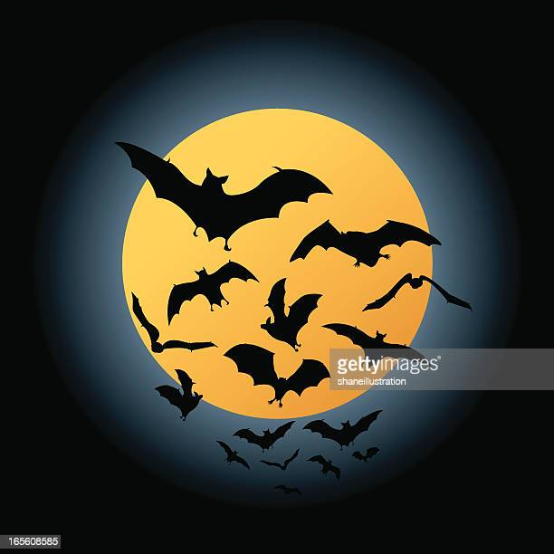 Bat Flight