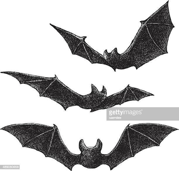 ilustraciones, imágenes clip art, dibujos animados e iconos de stock de dibujo de murciélagos - vampiro
