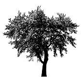 Baum Silhouette schwarz isoliert