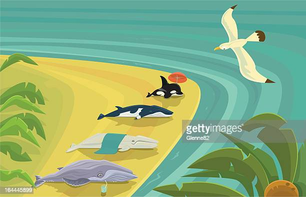 beached whales sunning themselves - humpback whale stock illustrations, clip art, cartoons, & icons