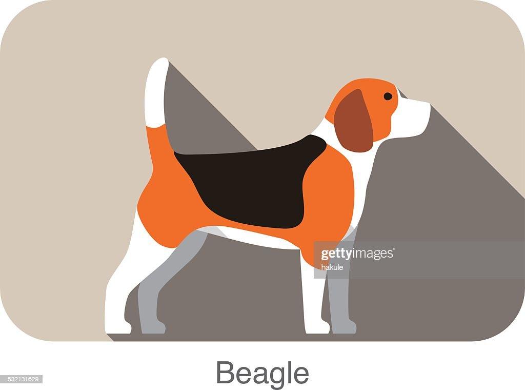 Beagle dog breed flat icon design