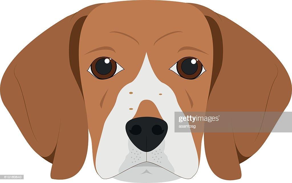 Beagle dog isolated on white background vector illustration