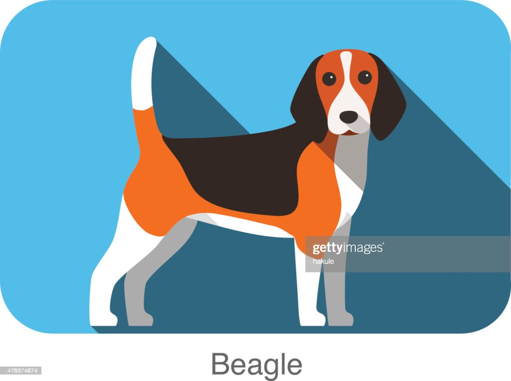 Beagle, dog standing flat icon design