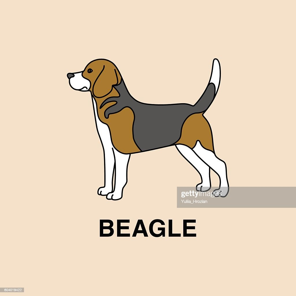 Beagle dog standing in profile pose.