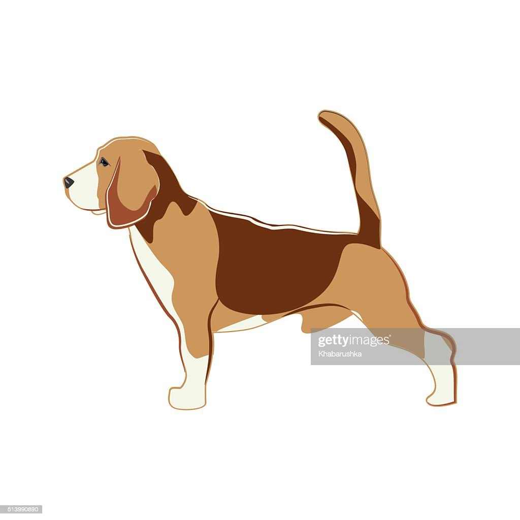 Beagle, dog. Vector Illustration