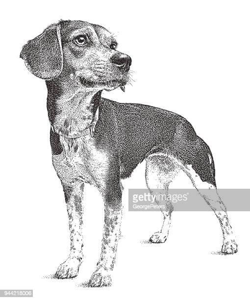 Beagle dog waiting to be adopted