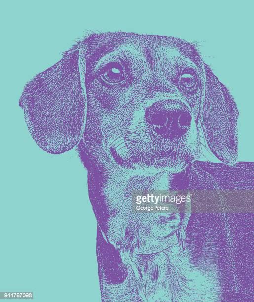 Beaglehund väntar på att antas