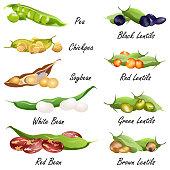 Beans (common bean. pea, chickpea, soybean, lentil ), set of vector illustrations.