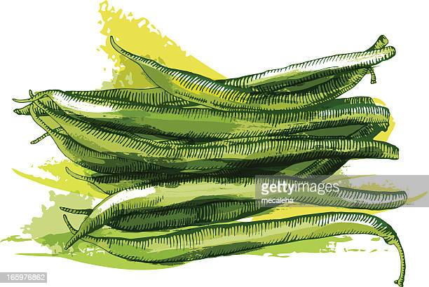 beans - bean stock illustrations, clip art, cartoons, & icons