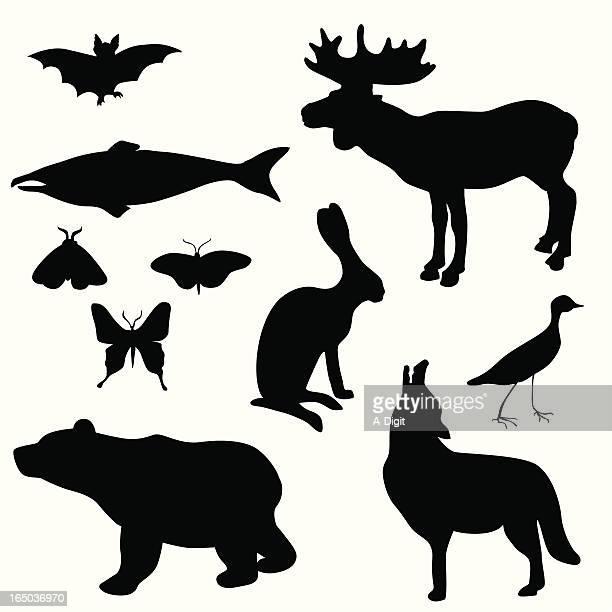 ilustraciones, imágenes clip art, dibujos animados e iconos de stock de bearbatjackrabbit - correcaminos
