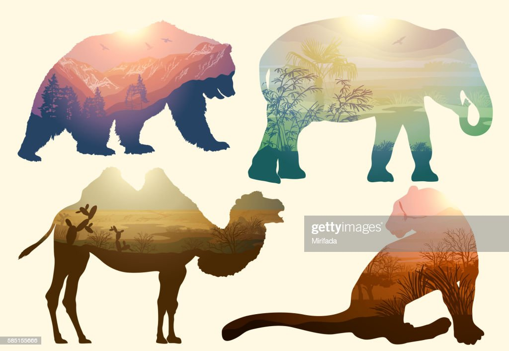Bear, elephant, camel and Leopard for your design, wildlife concept