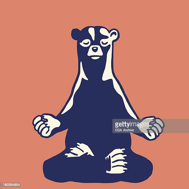 Bear Meditating