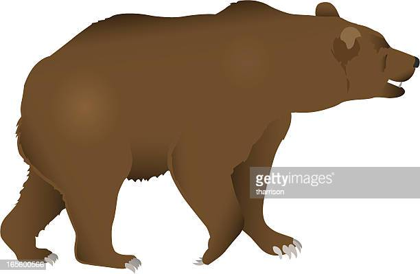 ilustraciones, imágenes clip art, dibujos animados e iconos de stock de bear - oso pardo