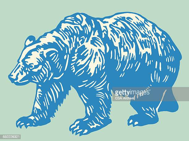 illustrations, cliparts, dessins animés et icônes de bear - ours