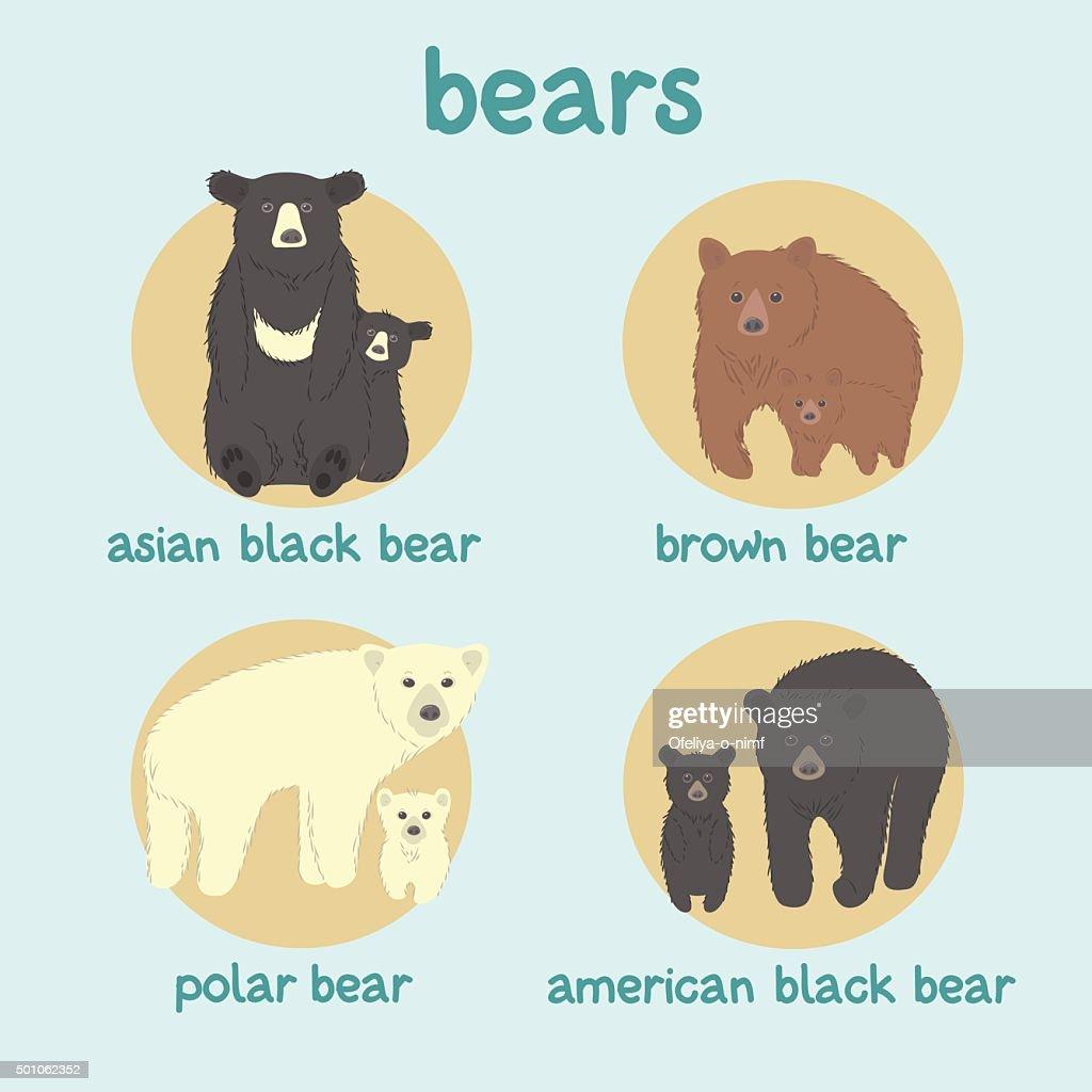 Bears vector set: asian black bear, brown bear, polar bear, american black bear