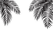 Beautifil Palm Tree Leaf  Silhouette Background Vector Illustra