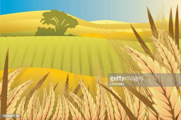 beautiful autumn background - harvest festival stock illustrations
