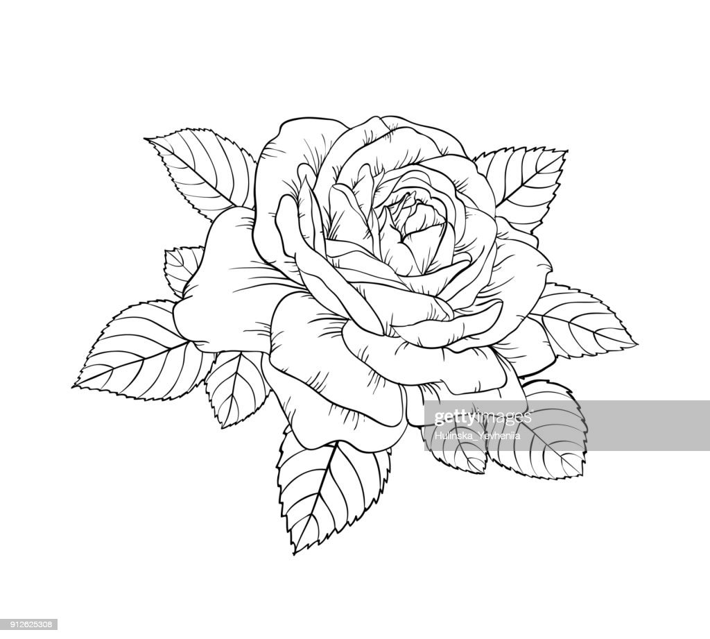 beautiful black and white rose and leaves. Floral arrangement isolated on background. design greeting card and invitation of the wedding, birthday, Valentine s Day, mother s day, holiday.