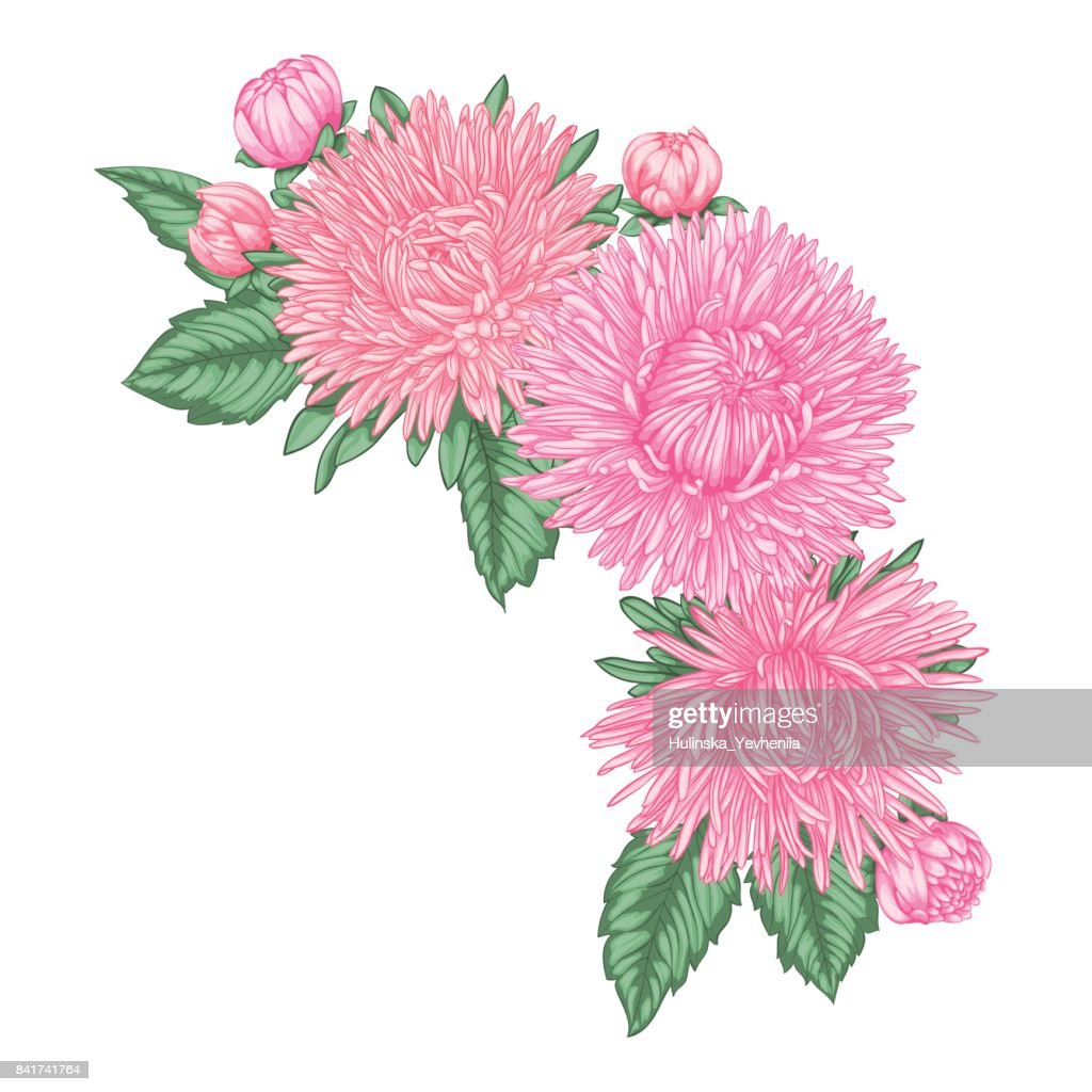 beautiful bouquet with pink asters and leaves. Floral arrangement. design greeting card and invitation of the wedding, birthday, Valentine's Day, mother's day and other holiday