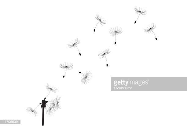 illustrations, cliparts, dessins animés et icônes de belle fleur de pissenlit - fleur de pissenlit