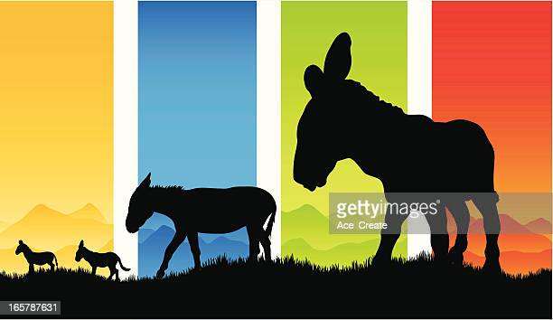 Beautiful donkey silhouettes in the country