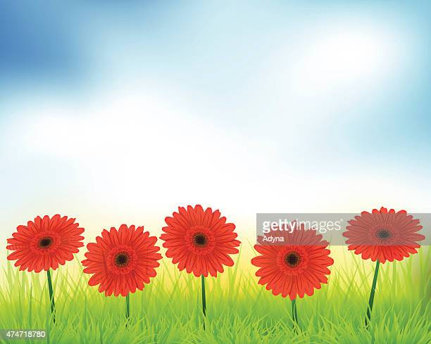 beautiful flowers - gerbera daisy stock illustrations, clip art, cartoons, & icons