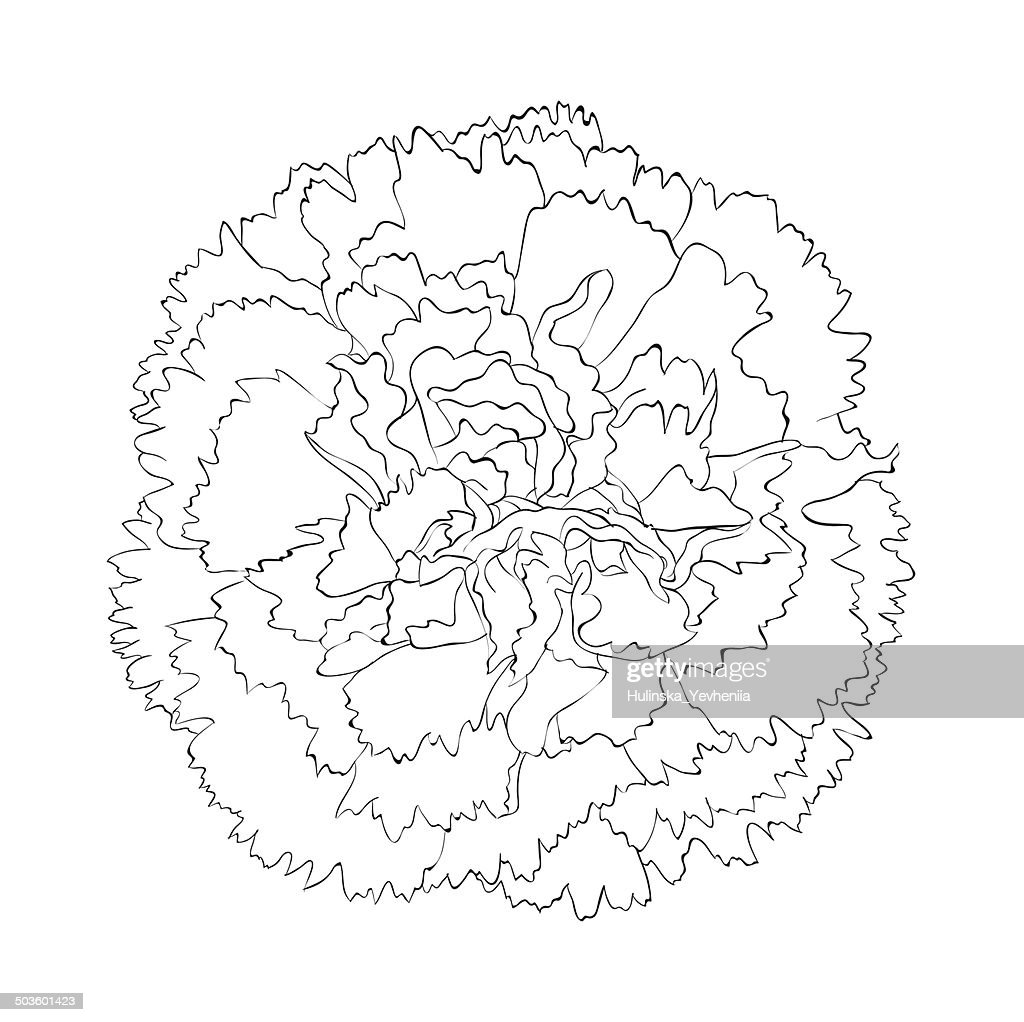 beautiful monochrome black and white carnation flower isolated on white background.