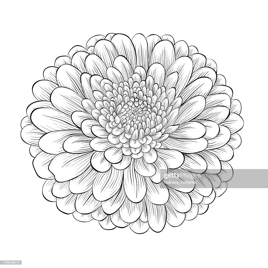 beautiful monochrome black and white flower isolated