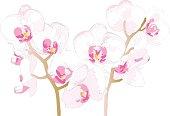 Beautiful Orchidaceae