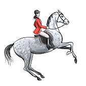 Beautiful rider and dapple grey horse on white. Horseman girl in red jacket on rearing up stallion.