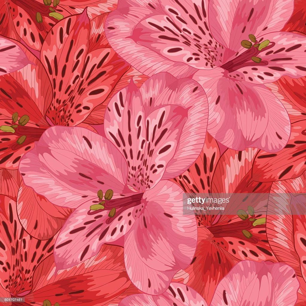 Beautiful seamless background with pink and red alstroemeria flower.