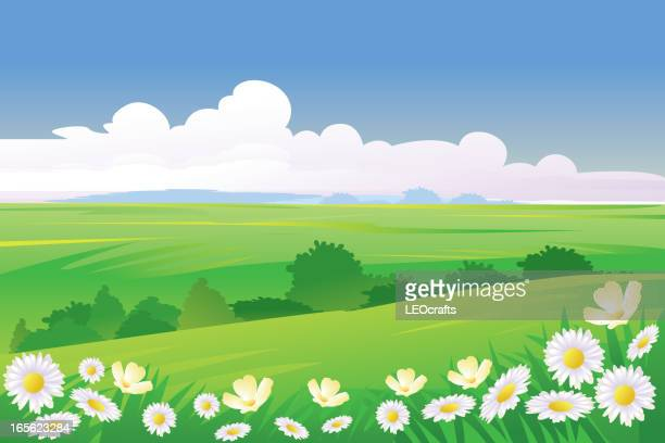 beautiful spring background - field stock illustrations, clip art, cartoons, & icons