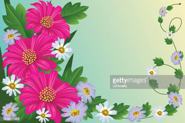 beautiful spring flowers - gerbera daisy stock illustrations, clip art, cartoons, & icons