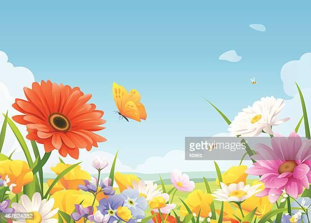 beautiful summer flowers - daisy stock illustrations