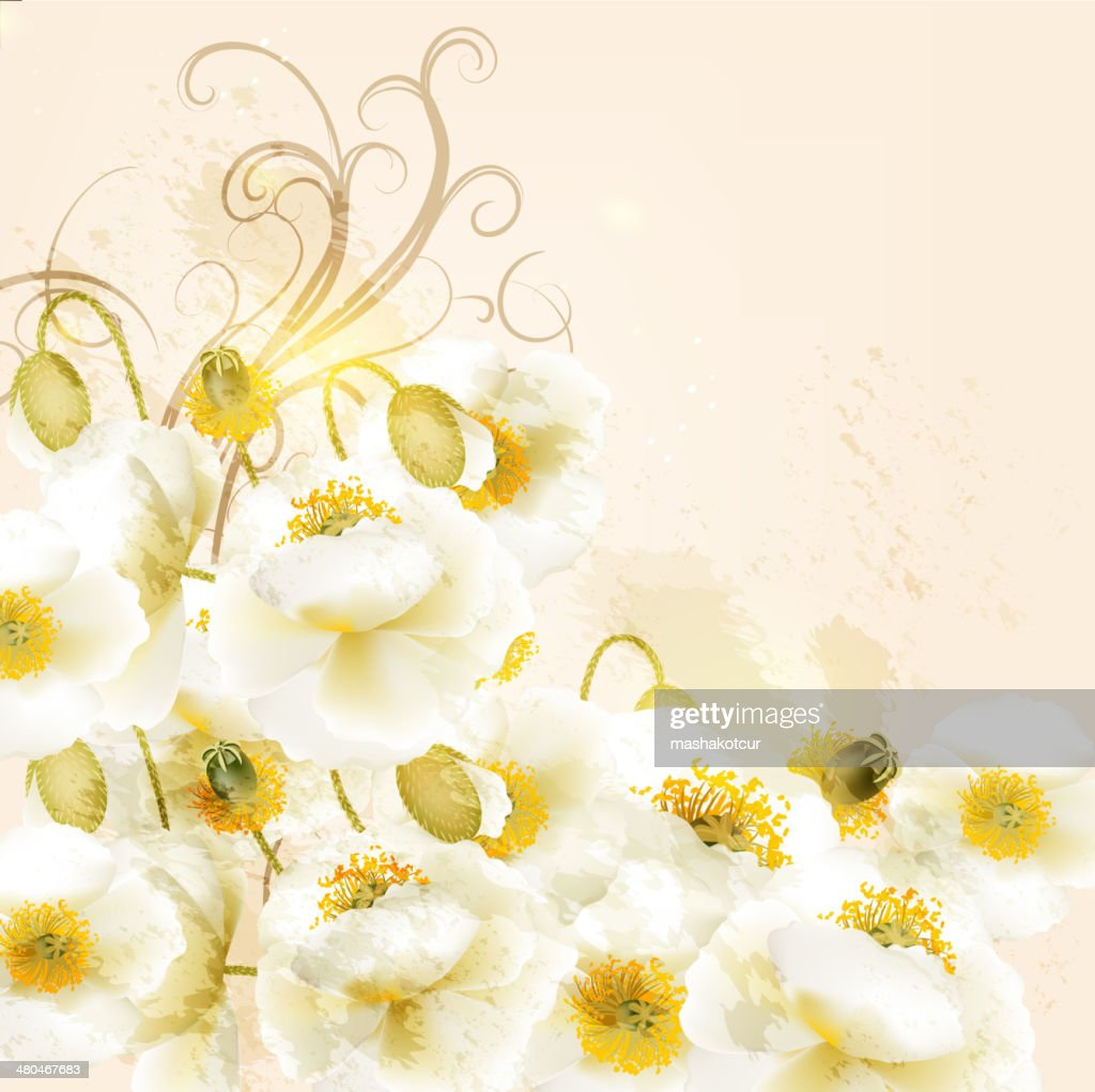 Beautiful Vector Background With White Poppy Flowers Vector Art