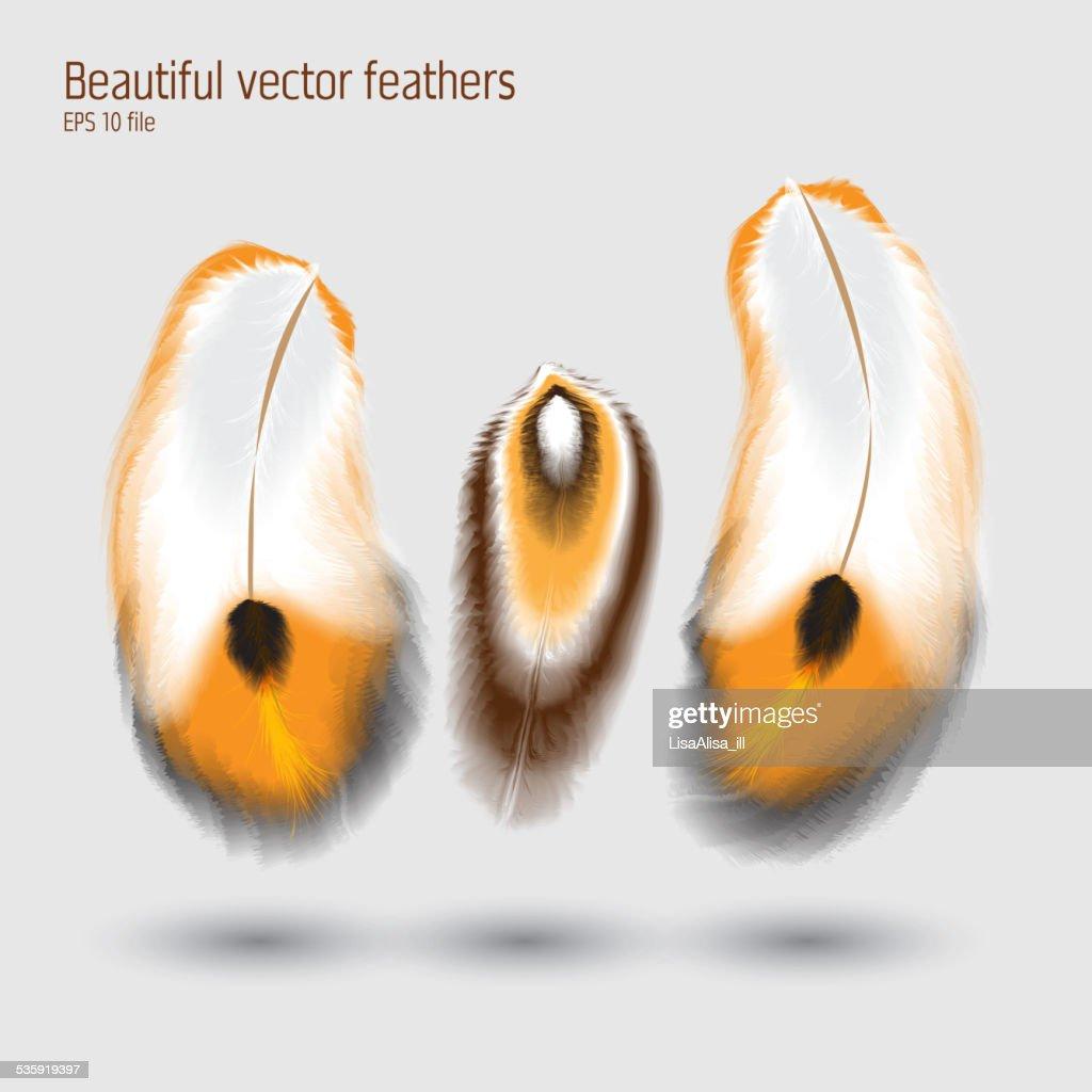 Beautiful vector feathers illustration : Vector Art