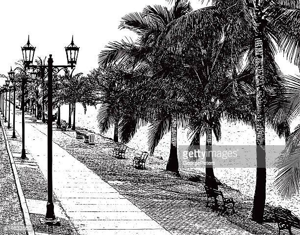 beautiful walking path with palm trees and water's edge - panama city panama stock illustrations, clip art, cartoons, & icons