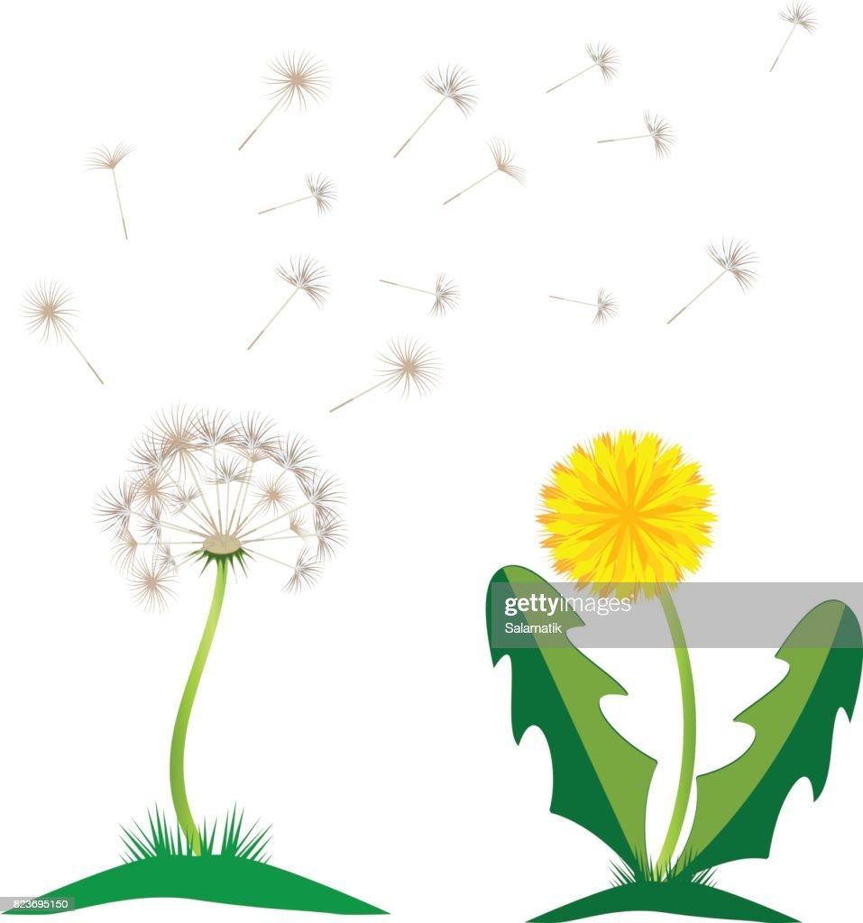Beautiful Yellow Dandelion With Leaves Flower Meadow Dandelion