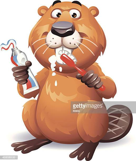 beaver brushing teeth - brushing teeth stock illustrations