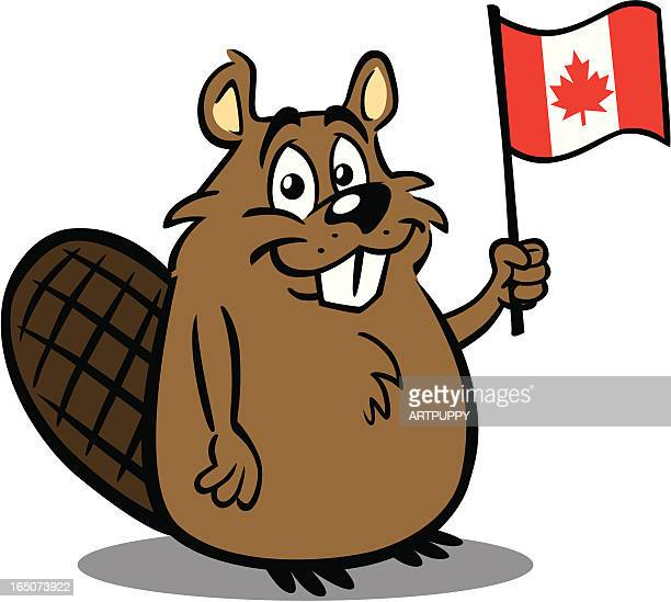 beaver holding canadian flag - canada day stock illustrations