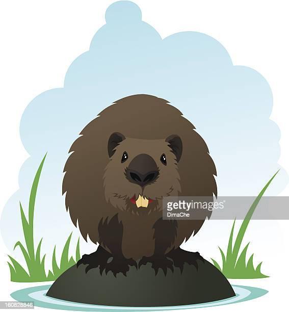 beaver - funny beaver stock illustrations