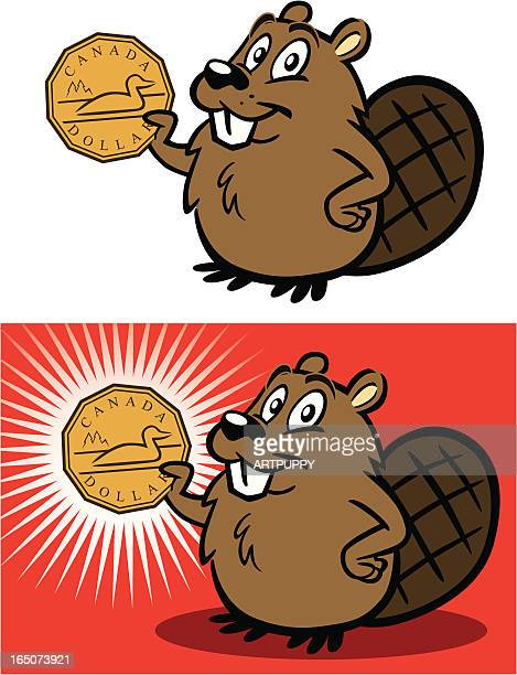 beaver with canadian dollar - canadian currency stock illustrations