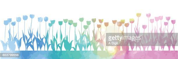 bed of tulips watercolor - perennial stock illustrations, clip art, cartoons, & icons