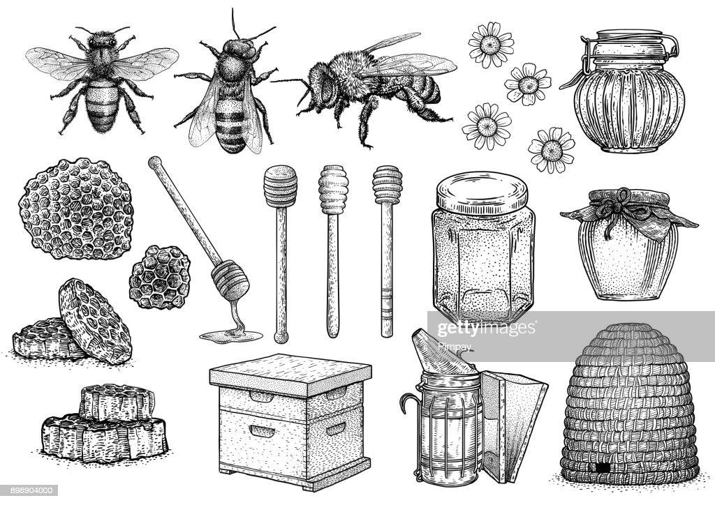 Bee, honey, hive, beekeeping illustration, drawing, engraving, line art, vector
