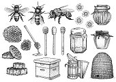 Bee, honey, hive, beekeeping illustration, drawing, engraving, line art, vector