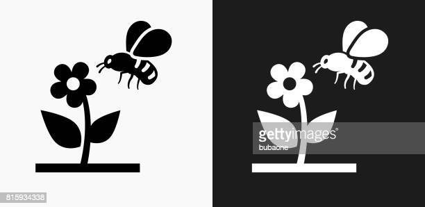 Bee on Flower Icon on Black and White Vector Backgrounds
