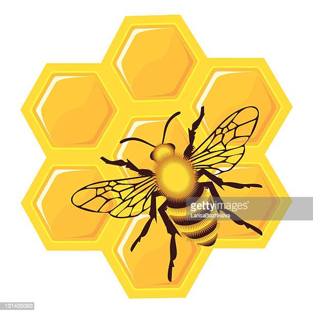 bee on honey cells - bumblebee stock illustrations, clip art, cartoons, & icons