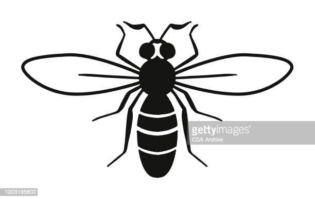 illustrazioni stock, clip art, cartoni animati e icone di tendenza di bee - calabrone