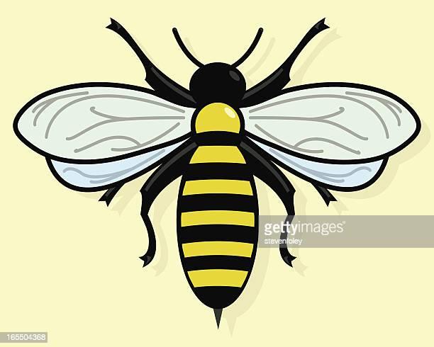 bee - queen bee stock illustrations