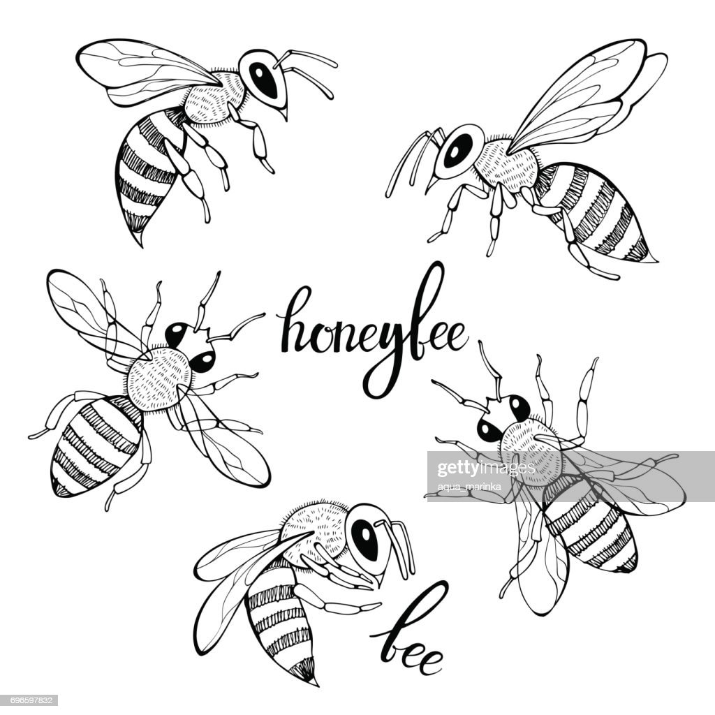 Bee. Vector set. Isolated monochrome elements for design on a white background.